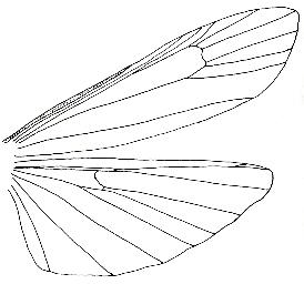 Aile De Papillon Dessin etude des ailes des papillons